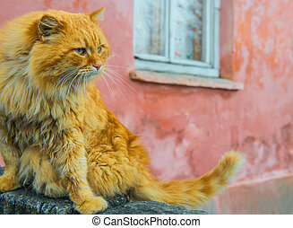 Red cat with green eyes sitting near window