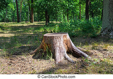 an old stump in the summer park - old tree stump in the...