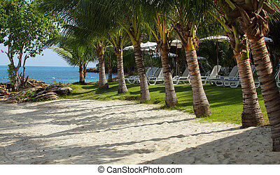 Cozy mini beach with sand and green lawn, palm-trees and...