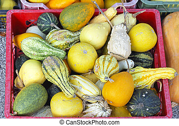 Gourds - Pumpkins and Gourds Squash Decoration For Halloween