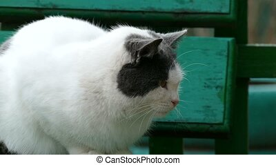 street white sulphur cat sitting on bench in outside cold...