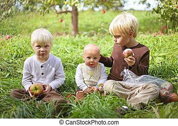 Young Children Eating Fruit at Apple Orchard - Three young...