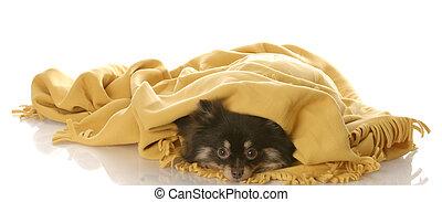 puppy hiding under a blanket