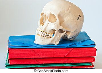 Skull organizer - Plastic skull on top of a pile of files