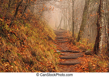 Foggy Appalachian Trail - A foggy Appalachian Trail at...