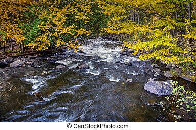 Autumn River In The Forest - The Ontonagon River flows...