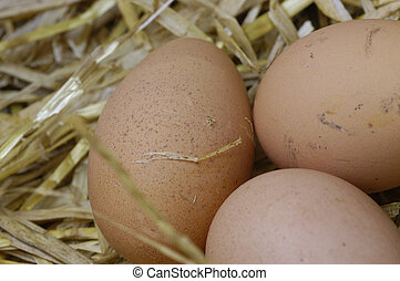 fresh farm eggs - close-up of three fresh organic farm eggs...