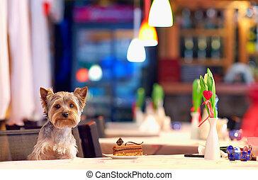 Yorkshire terrier enjoying dessert in cafe