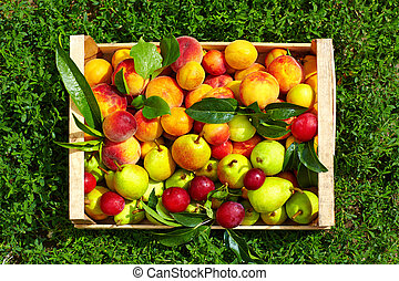 fresh summer fruit in crate on grass
