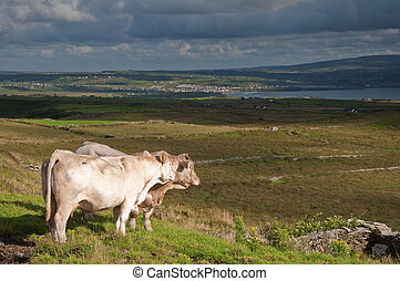 landscape of rural ireland, west coast ireland - photo...