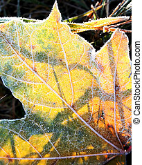 Yellow hoarfrost leaf in the early sun autumn morning