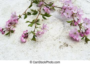 aéreo, vista, rosa, japonés, Prunus,...