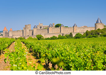 Vineyards near the Cite in Carcassone - View of vineyards...