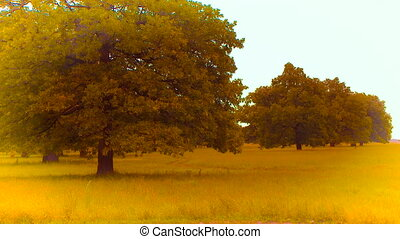 Oaks tree on the green hill under sky with cloud HD