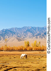 Holy Fish Pond scenery - Horse eating grass at Holy Fish...