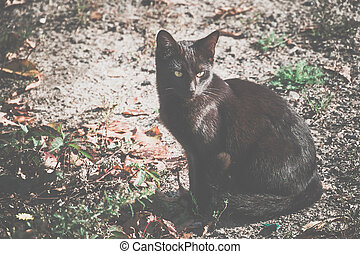 Black Cat on the Ground - Cute black cat sitting on the...
