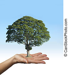 Trees are the Lungs of Our Earth - Female with hand palm up...