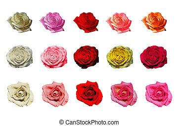 set isolated roses on white background