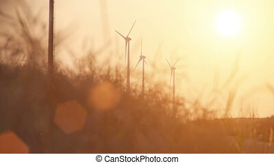 wheat field with sundown wind turbine - Wheat field at a...