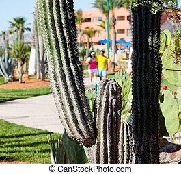 desert plants in a vacation resort in los cabos, Mexico
