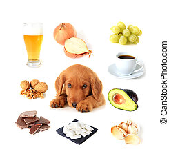 Foods toxic to dogs - Chart of toxic foods for dogs. Also...