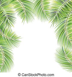 Palm tree branches. - Palm tree branches on white...