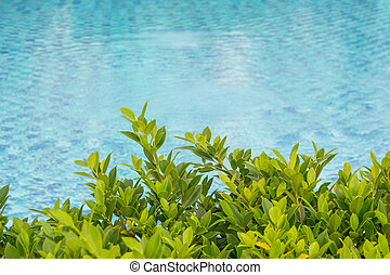 Trees beside the swimming pool