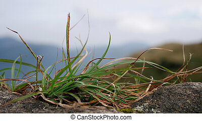 The close up of green grass on rock