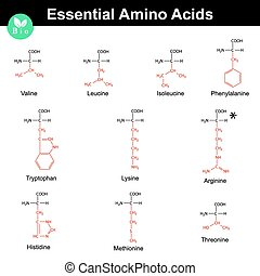 Essential amino acids - Main essential amino acids with...