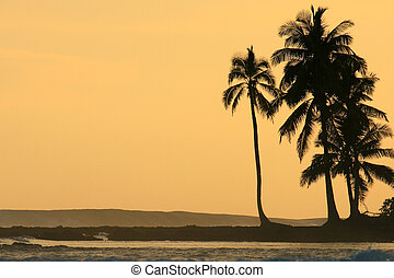 Coconut palm trees silhoutted against orange sunset