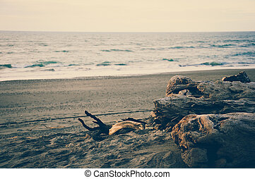 Sunset at Hokitika Black Sand Beach with Dead Wood Log with...