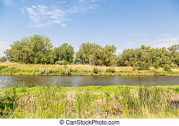 Platte River in Summer - Cattails and grasses along the...