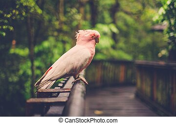 White and pink parrot siting on wooden perch