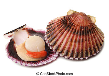 Raw scallops on white background