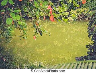 tropische, Teich, dschungel, tief