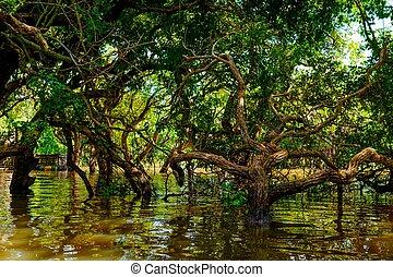Flooded trees in mangrove rain forest. Kampong Phluk...