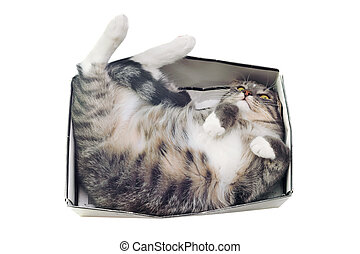 cat lying in box on white background. High-key photo...