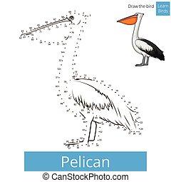 Pelican bird learn birds coloring book vector - Pelican bird...