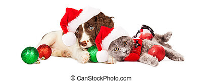 Puppy and Kitten Laying With Christmas Ornaments - Cute...