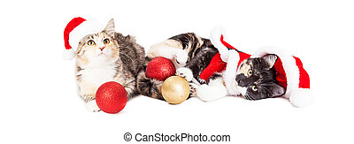 Two Playful Christmas Kittens - Two cute baby kittens...