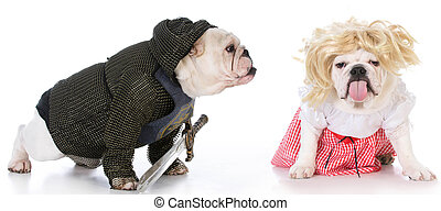 knight and damsel - bulldogs dressed up like a knight and a...