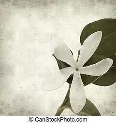 textured old paper background with white Natal Plum flower