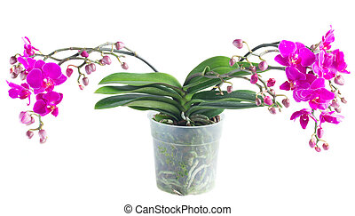 Bunch of violet orchids - violet orchids with green leaves...