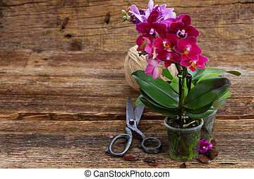 Spring violet orchids - Spring pink and violet orchids on...