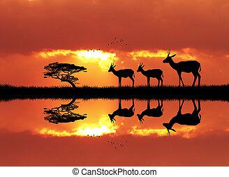 gazelle in African landscape - illustration of gazelle in...