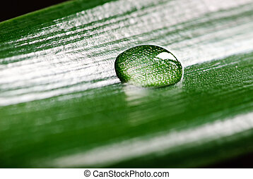 Green grass with raindrops background - Green grass with...
