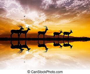 gazelle on river at sunset - illustration of gazelle on...
