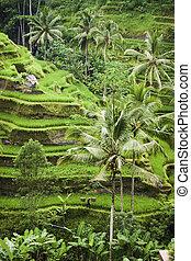 Ubud Green - Gardens of Ubud Bali, Indonesia