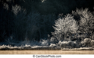Frosted morning tree silhouettes - Trees and bushes at the...
