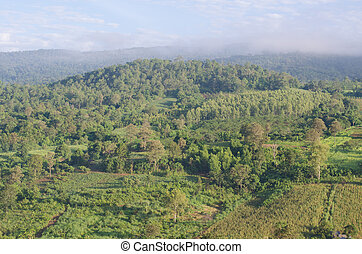 Tropical Mountain Range,This place is in the Phurua national park,Thailand